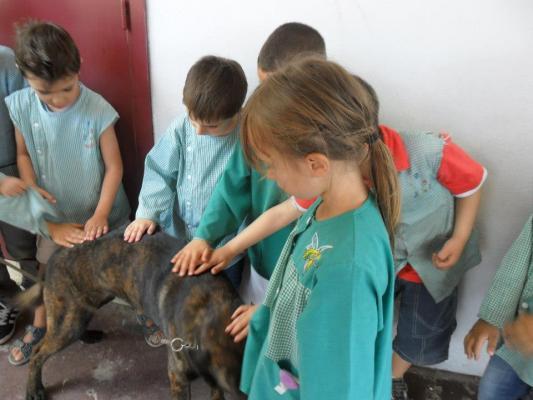 Cani visitatori - Pastori olandesi nella scuola materna
