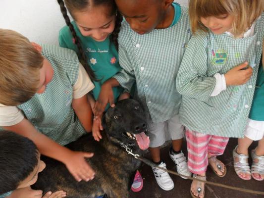 Cane visitatore - Cane da pastore olandese Dark Side des Fonds de Gueule