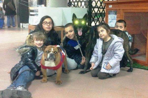 Animazione per bambini - cane da pastore olandese e bulldog inglese