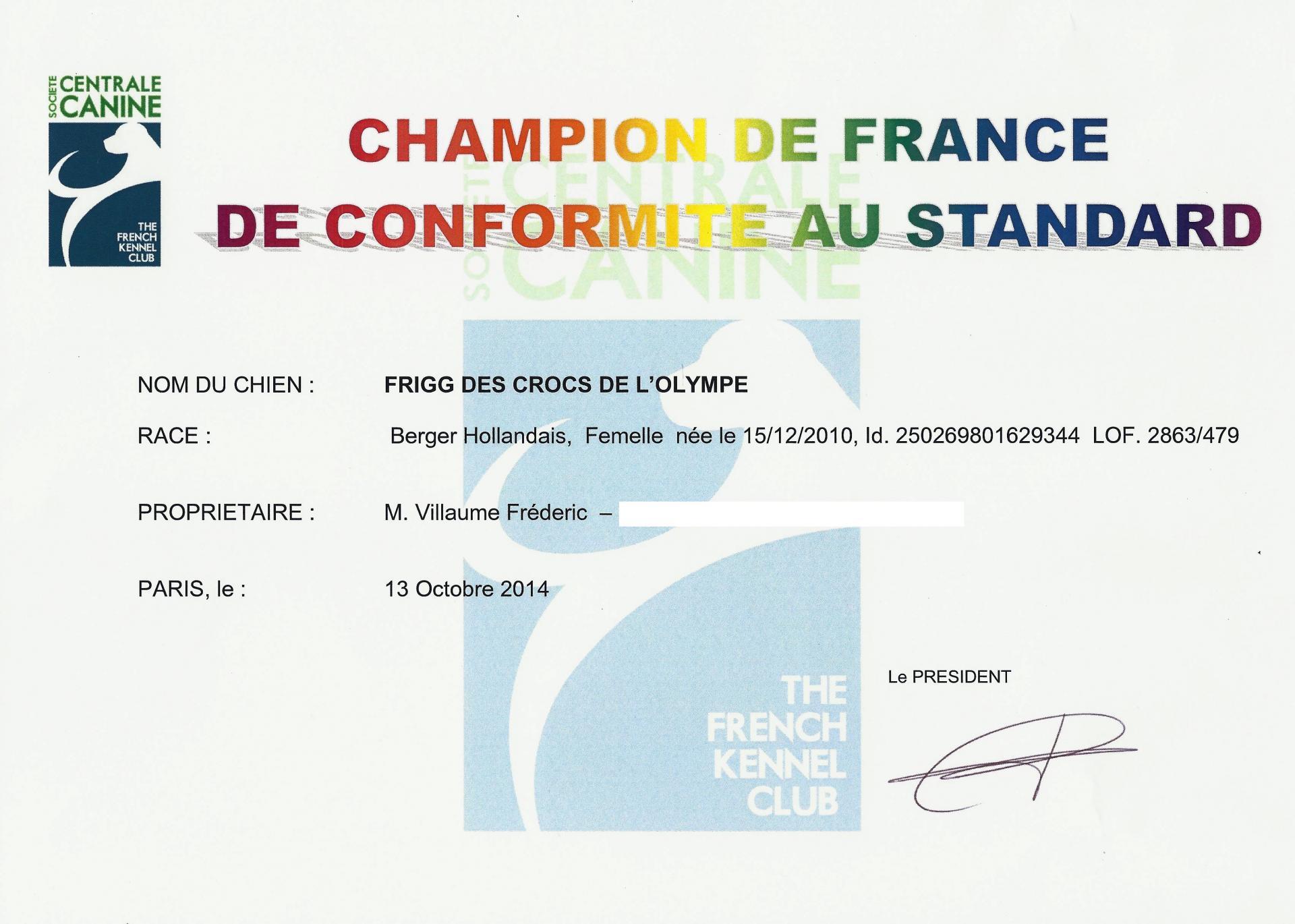 Campione di francia di bellezza pastore olandese
