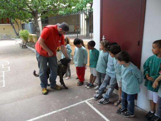 Cane da pastore olandese visitatore nelle scuole